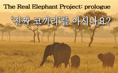 Real Elephant Project① '진짜 코끼리'를 아시나요?